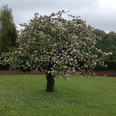 Blossom at more than seventy years old!